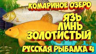 русская рыбалка 4 Язь Линь золотистый озеро Комариное рр4 фарм Алексей Майоров russian fishing 4