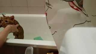 Как помыть кота, который не любит мыться