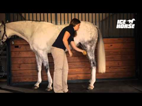 Jerking off horses