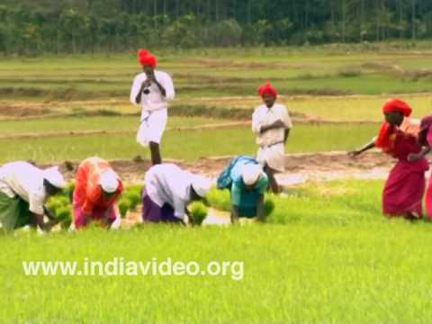 Tribal Dance Kambara Nritham Adiyar tribe Wayanad Kerala India