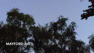 Mayford Bats