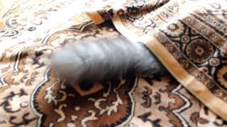 Новая мышка для кошки