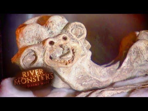 The Mythical Japanese Monster | CATFISH | River Monsters