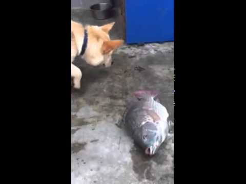 Dog Tries To Save Fish Out Of Water