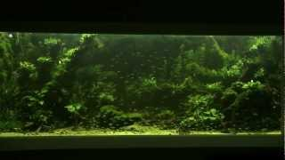 10`000l Aquascape