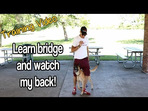 How To Do The Bridge And Watch My Back-Yes! Watch Now