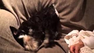 Lily The Mini Schnauzer Can't Get Comfy