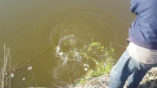 Рыбалка. Ловля  крупной рыбы на поплавок под берегом