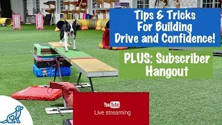 Dog Agility Teeter Totter Training - LIVE! - Subscriber Hangout