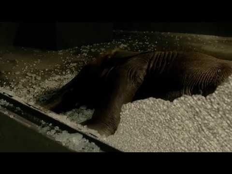 The protector - An elephant through the window