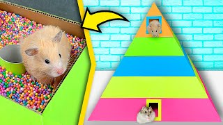 Hamsters in 5-Level Pyramid Maze | Rainbow maze for hamsters
