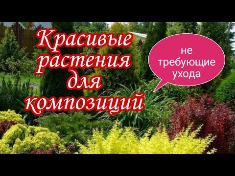 Красивые растения для композиций .Самые неприхотливые и декоративные.Дача.Сад.Ландшафтный дизайн.