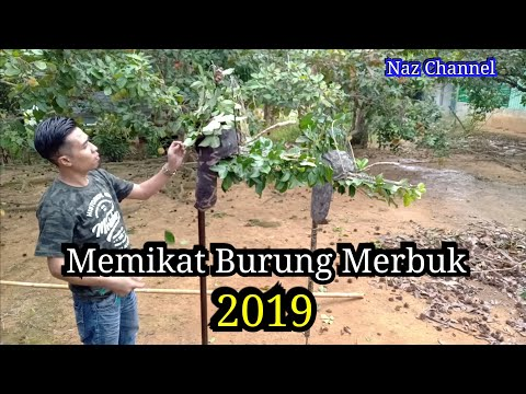 Memikat Burung Merbuk (Special Edition) 2019 Laman Pahang