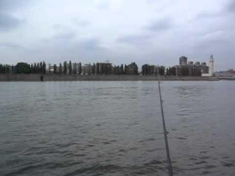 Pêche dans le fleuve Saint-Laurent à Montréal