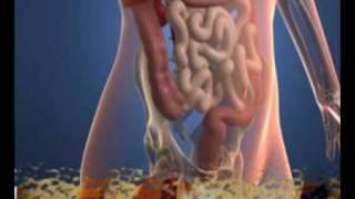 Zegee.com - What Is Gluten? Celiac Disease?