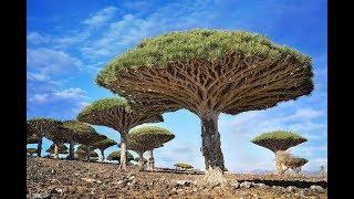 16 самых красивых деревьев мира.