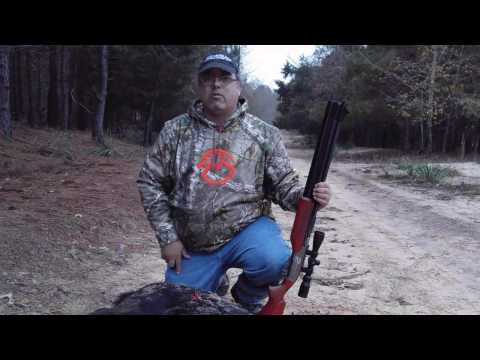 Air Bolt Takes 150 Pound hog with 1 SHOT!!! - Hog Hunting with AirgunWebTV!