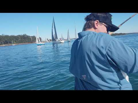 Port Stephens Mulloway
