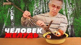 ОН ГОВОРИТ С ЖЕЛУДЯМИ // Алексей Казаков