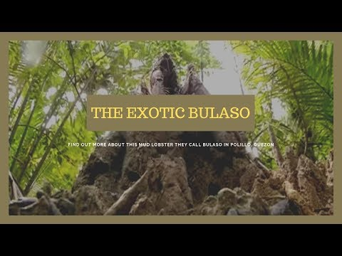 The exotic bulaso of Polillo, Quezon | Kapuso Mo, Jessica Soho