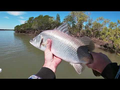 Townsville Creek Fishing