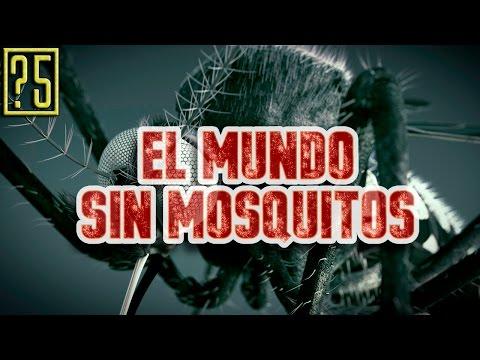 ¿Que pasaría si se extinguieran los mosquitos?