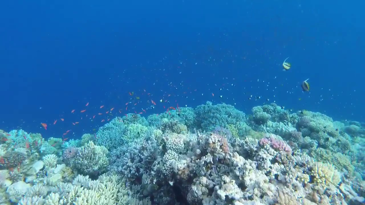 Visit Egypt - Short Paragraph About Egypt ( Diving & Swimming )