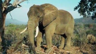 """Die """"Elefantenflüsterin"""""""
