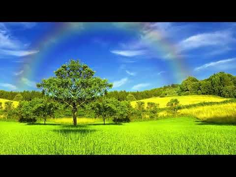 The Best Relaxing With Beautiful Green Grasses With Cricket Sound, Pretty Green Gasses Nature 2018