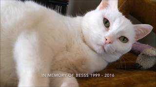 The Oreo Cat: Happy International Cat Day