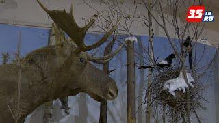 Череповецкий музей природы отметил свое 100-летие гашением конверта