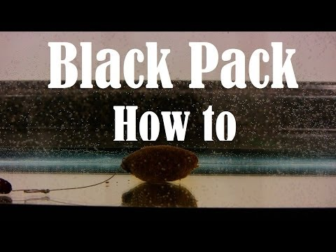 How to make a Black Pack Packbait aka Wheat Germ for carp fishing tutorial underwater