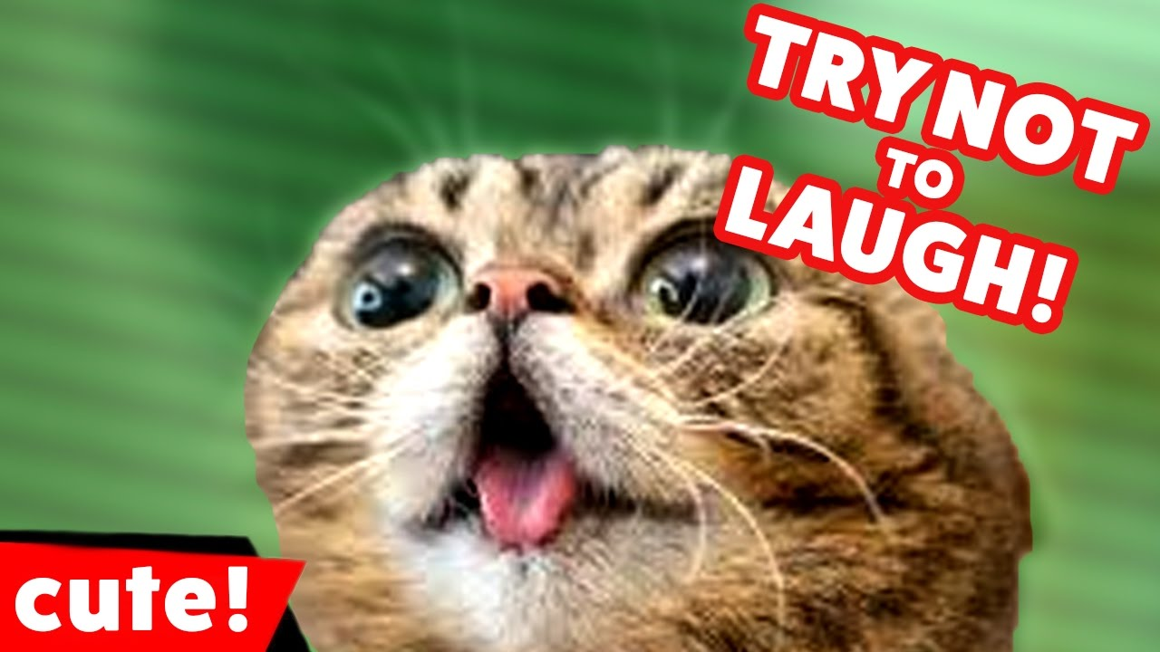 Try Not To Laugh at These Funny Cat Videos of 2016 Weekly