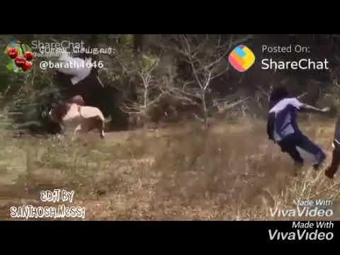😎😎😎 Marana Mass Jallikattu  🔥veera  Tamilan Vilayattu 🔥