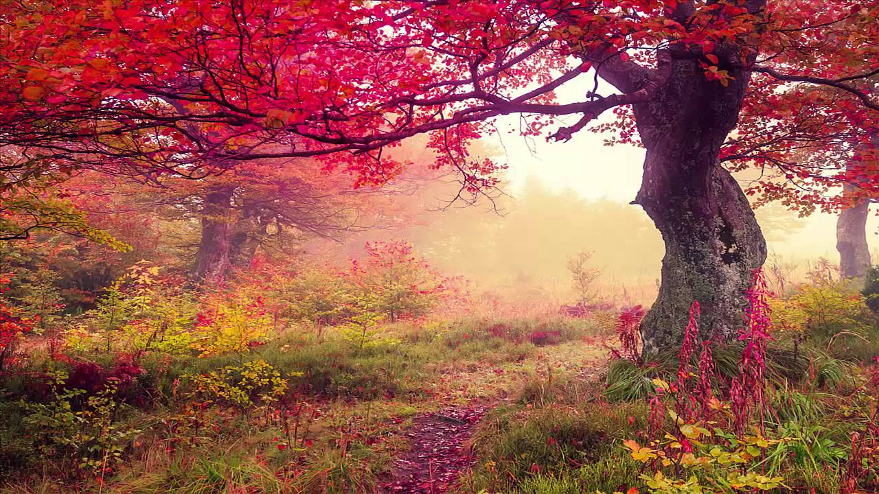 Nature Sounds Windy Autumn Day - YouTube