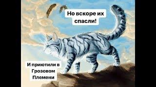 История Ласточки. КОТЫ ВОИТЕЛИ