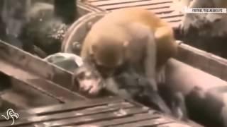 CLIP HOT Funny Animal