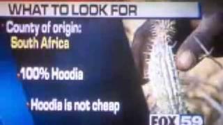 Hoodia Gordonii Weight Loss - buy hoodia diet pills