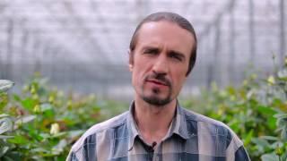 Компания Камелия, производитель роз в Украине(, 2016-08-29T08:50:36.000Z)