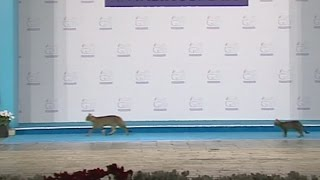 Three cats breach security at the G20 summit in Turkey