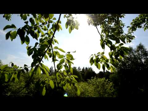 Relaxing Nature Music Swedish - Leaves of a Tree from the Sun Sounds of Birds