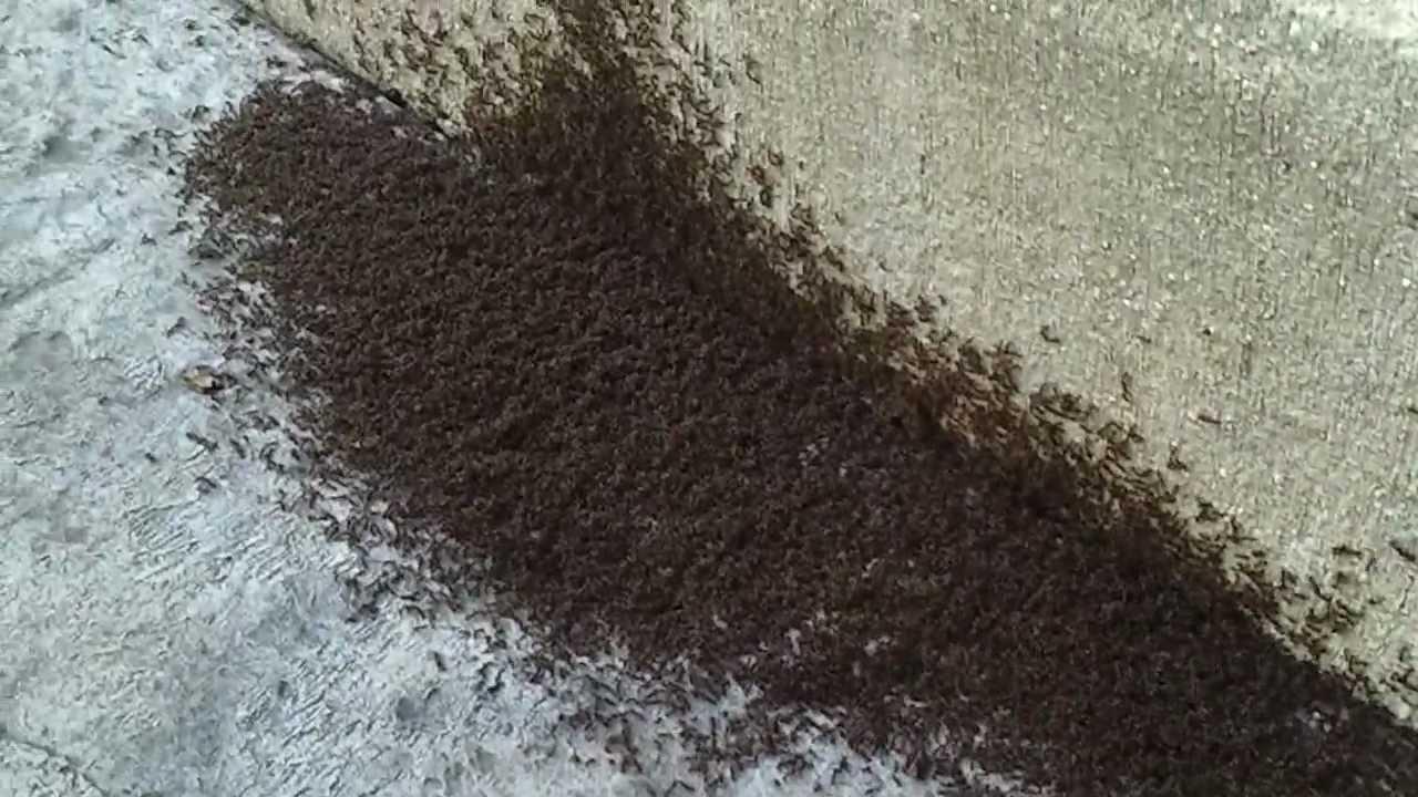 Ant Infestation In Kitchen Wow Blog