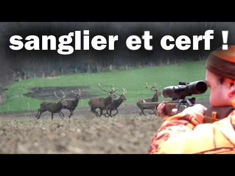 TIR D'UN GROS SANGLIER A 10 METRES ! ouveture de la chasse aux gros gibiers 2017-2018