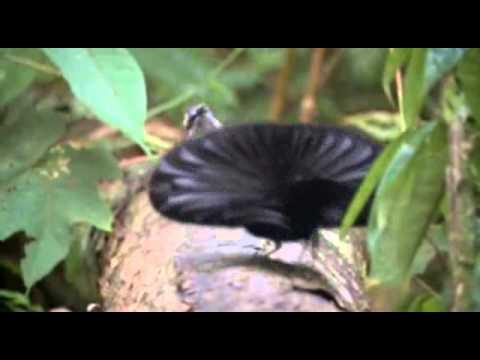смешные птицы видео у гинеколога