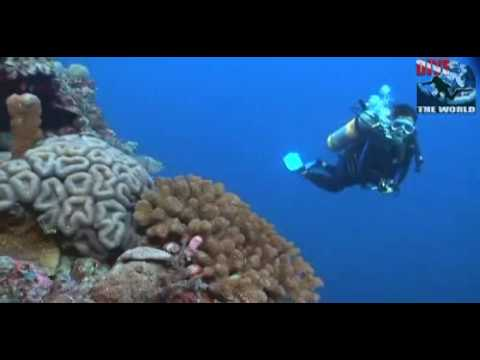 Diving Layang Layang. Malaysia underwater video: hammerhead sharks, manta ray, dolphins