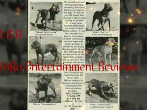 True best pitbull bloodline Red Family Hemphill