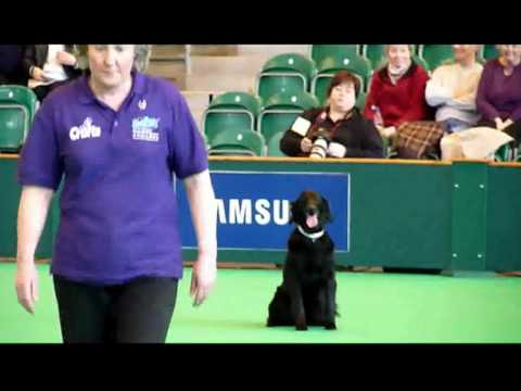 Crufts 2010 - Sally & Summer (flatcoated retriever) in the Inter Regional Obedience