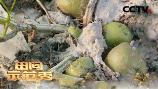 《田间示范秀》 20201221 洋芋花开在定西|CCTV农业 - YouTube
