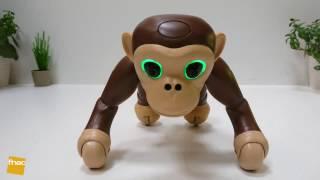 Test du robot Zoomer Chimp Spinmaster