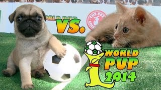 World Pup - Pug Puppies Vs. Adorable Kittens